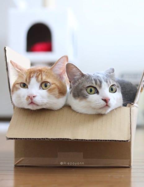 振り向けば、みっちり。 箱入りなニャンコたちが仲良しすぎて萌え尽きそう