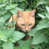 夏を涼しくしたいけど……ミントの香りもアロマオイルも猫にはN…