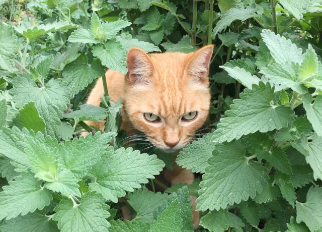 夏を涼しくしたいけど……ミントの香りもアロマオイルも猫にはNGなんです