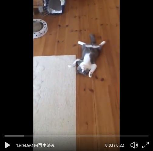 見事な開きが落ちているゾ!猫のくつろぐ姿が大っぴらすぎ