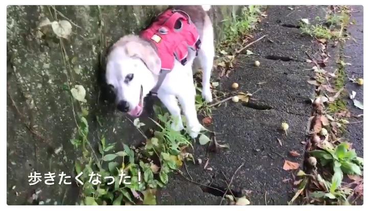 高齢犬に多くのエール 飼い主の愛情と犬自身の意欲で寝たきりから歩けるように