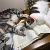 何で猫ってそうなの!学習意欲を全力で削ぎにかかってくる「あ…