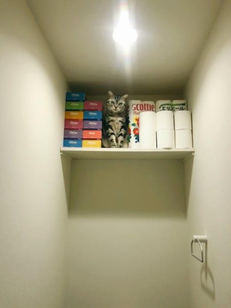 リアルトイレの神様?棚に乗ってしまった猫ちゃんがジャストフィット過ぎ