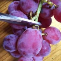 これ知ってた? ブドウを美味しい状態で長持ちさせる方法