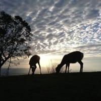 アフリカかと思ったら奈良で鹿!?あまりのしっくり具合に16…