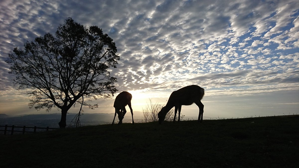 アフリカかと思ったら奈良で鹿!?あまりのしっくり具合に16万いいね