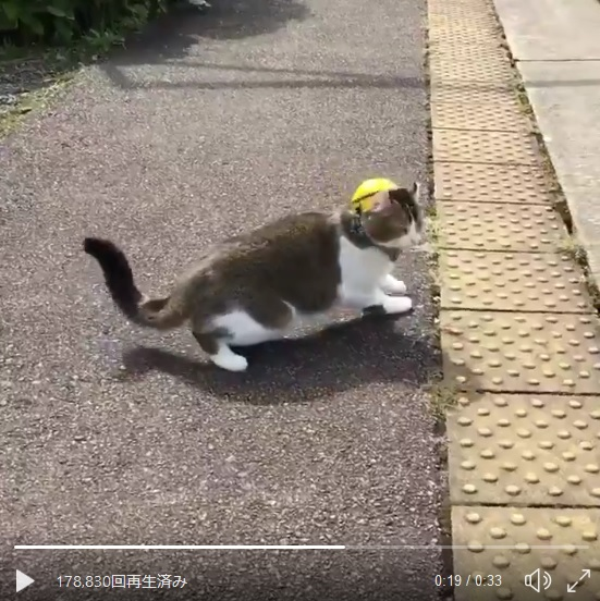 会津鉄道のアイドル猫たちに胸キュン!芦ノ牧温泉駅のらぶ駅長&ぴーち施設長