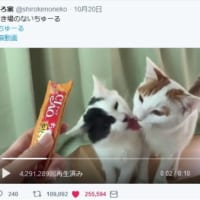 まさに「リア獣」 猫同士のいちゃつく動画がほほえましくも羨…