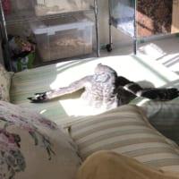 フクロウも日向ぼっこ アフリカワシミミズクのくつろぐ様子が…