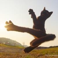黒猫はツイッター映えする事実 猫を撮影するプロカメラマンの…