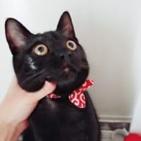 「おれちがう。もともと白猫」 イタズラがばれた黒…