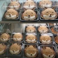 チベットスナギツネがずらり「絶滅どうぶつ図鑑展」のケーキが…