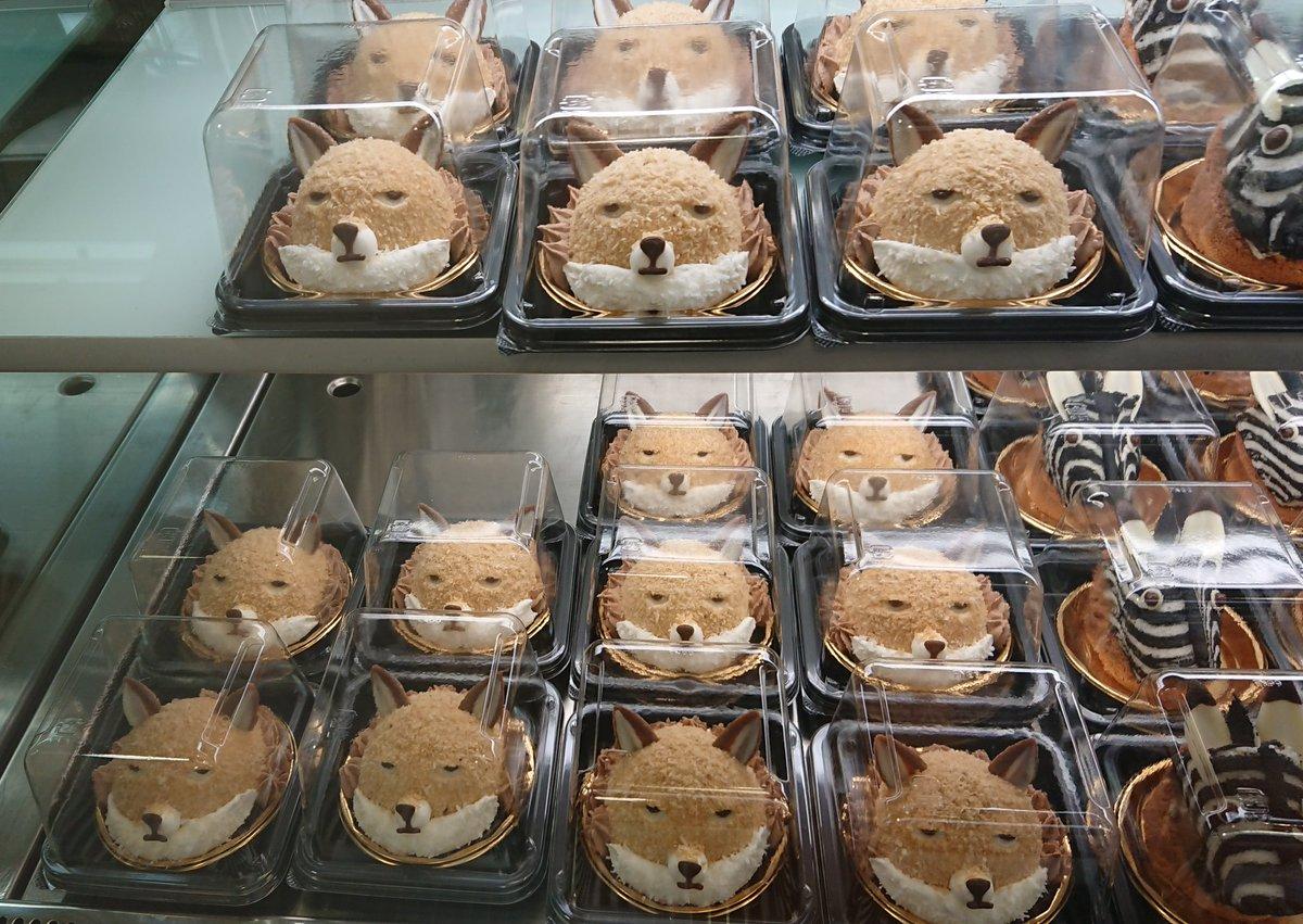 チベットスナギツネがずらり「絶滅どうぶつ図鑑展」のケーキが圧巻