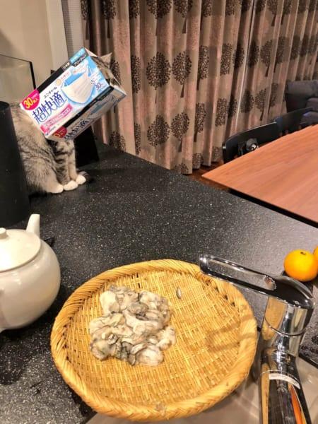 猫も手を借りたい 控えめな助けてアピールに思わず爆笑