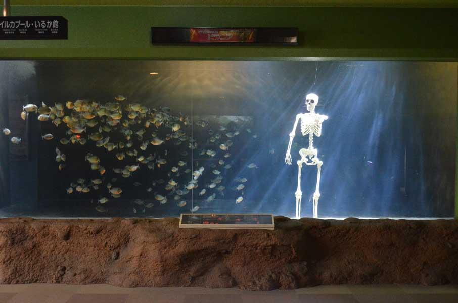ピラニア水槽の全体(青森県営浅虫水族館提供)