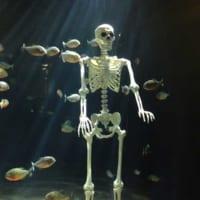 ドッキリ!浅虫水族館のハロウィン特別展示がブラックすぎる