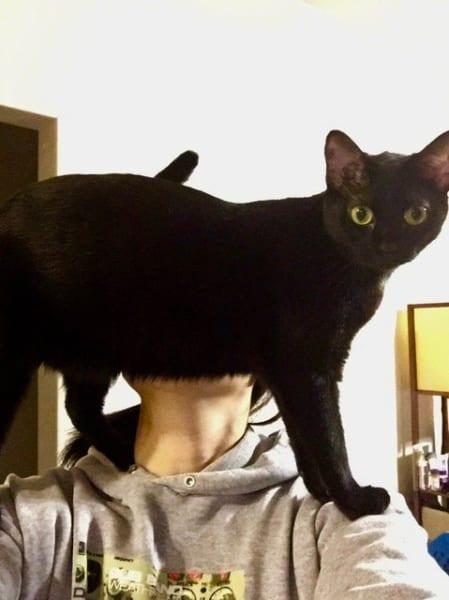 想像とは違う肩乗り猫ちゃんに「違う、そうじゃない」