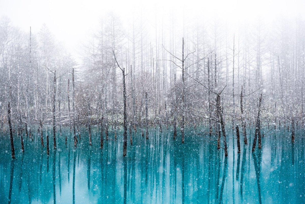 雪の白と青いみなも 北海道「青い池」の風景が幻想的