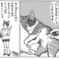猫のお腹がたるんでいるの、実は訳があったのです……