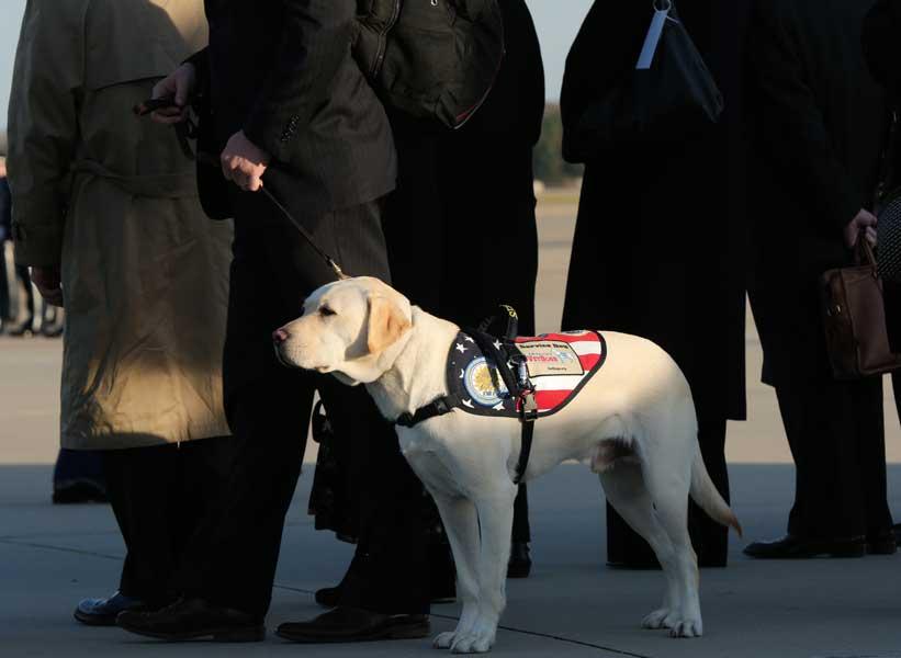 介助犬のサリーも共に移動(画像:USAF)