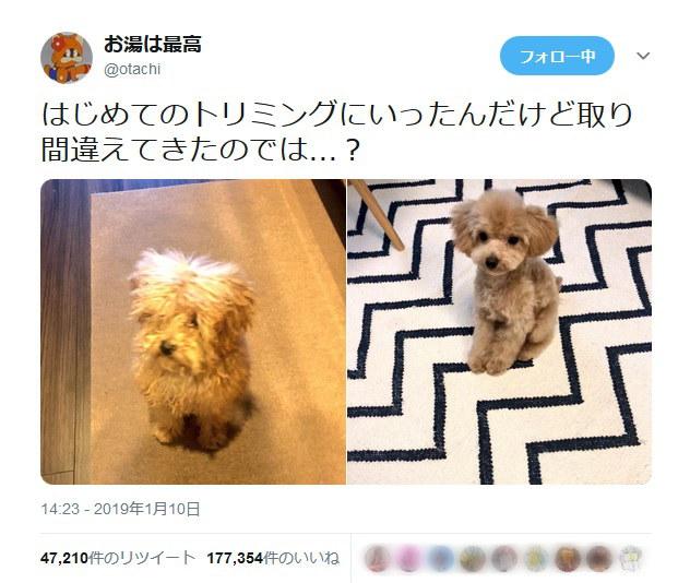 犬のトリミングビフォーアフターの姿に「あるある」の声多数