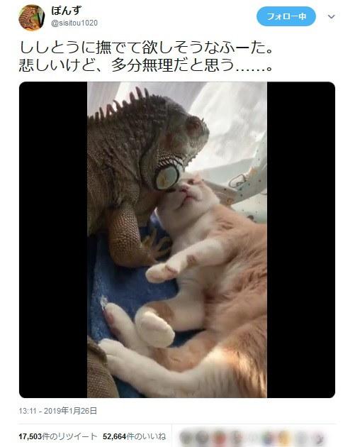猫がイグアナに片思い? なでてなでての猛アピールに思わず癒やされる