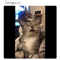 恍惚の毛繕い……猫が猫にケアされている様子に癒やされる