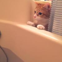 入浴中の飼い主に「は?」……猫には理解できない「お風呂」シ…