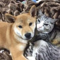 犬と猫を一緒に飼って喧嘩しないんですか?に対する回答に思わず…