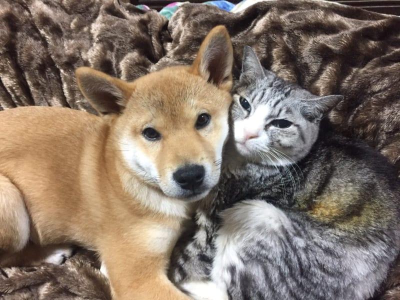 犬と猫を一緒に飼って喧嘩しないんですか?に対する回答に思わず癒やされる