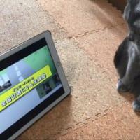 全猫がガン見! 猫専用の交通安全動画が公開