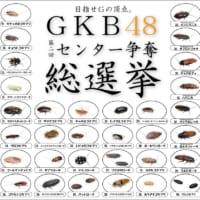 握手会も開催! ゴキブリ人気1位を決める「GKB48総選挙」…