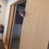帰宅したら猫が浮いていた!?そのトリックに思わずなーるほど…