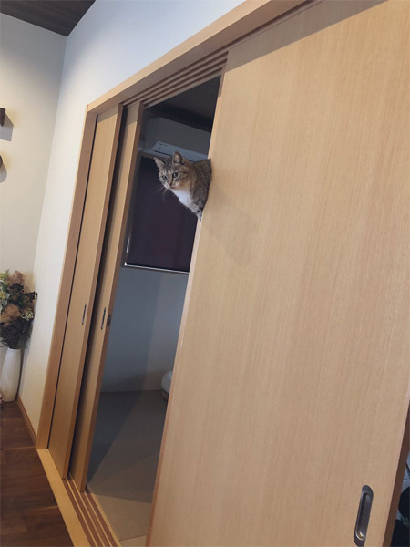 帰宅したら猫が浮いていた!?そのトリックに思わずなーるほどザ・ワールド