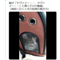 猫の鳴き声が「ヤヴァイ」と話題 ヤヴァイ~ヤヴァ…