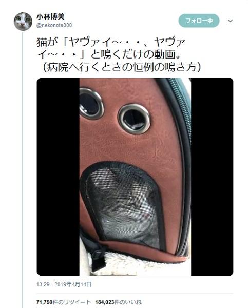 猫の鳴き声が「ヤヴァイ」と話題 ヤヴァイ~ヤヴァイ~