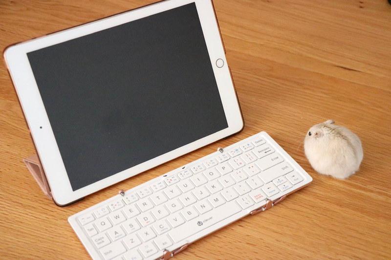 iPad用キーボードにモフモフマウス……?実は生きてます!!