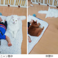 猫さんの「ニャン務中」と「休憩中」のBefore…