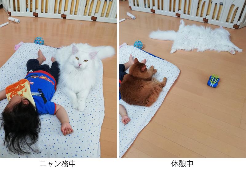 猫さんの「ニャン務中」と「休憩中」のBefore After