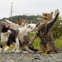 猫の「なん」「でや」「ねん」なショットがまるでトリオ漫才
