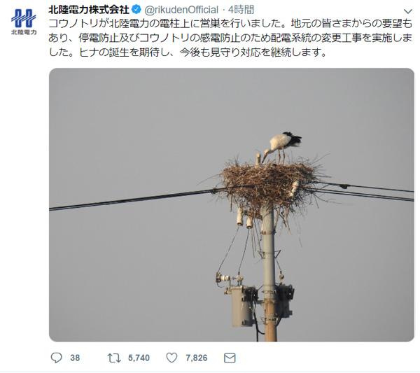 北陸電力の粋な計らい 電柱上のコウノトリの巣を見守る対応に「優しい」の声