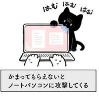 構っての圧がすごい猫vsお仕事用ノートPCの仁義…