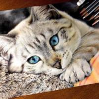 24色の色鉛筆で織りなす写真のような猫の絵 その瞳に「吸い…