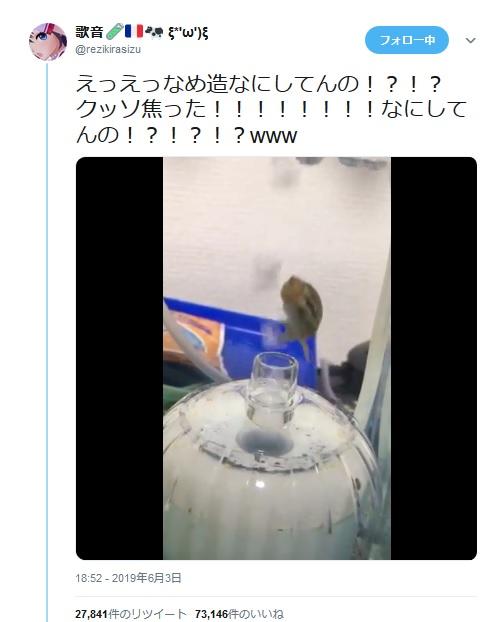 水槽の中で気泡とともに舞い上がっていく巻き貝に「癒される……」の声殺到