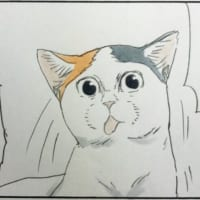 猫の貴重な舌出しシーンを激写!猫飼いあるあるなワンシーンに…