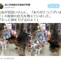 猫店長が見習い猫店員に接客の基本を伝授!挨拶の仕方を丁寧に…