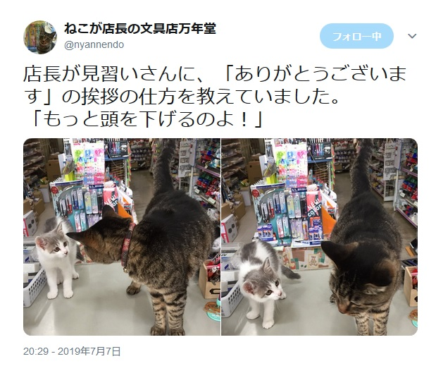猫店長が見習い猫店員に接客の基本を伝授!挨拶の仕方を丁寧に指導中