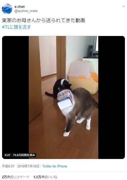 ヨーグルトの箱に自ら頭を突っ込んでいく猫 ソコが気になる~!