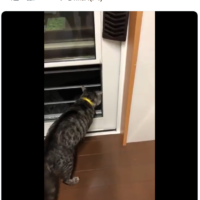 猫はじゅもんをとなえた! 外猫を威嚇する声がお経みたいと話題