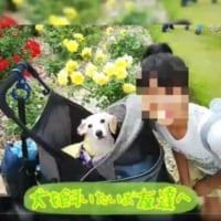 「犬を飼いたいお友達へ」 ある少女の言葉をまとめた動画に涙